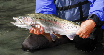 fisherman holds up rainbow trout caught on the upper kenai river