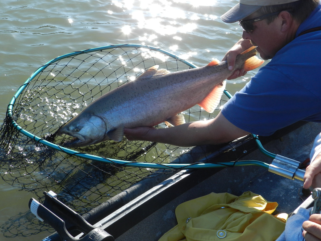 Fishing guide with Alaskan King Salmon, June 2013.