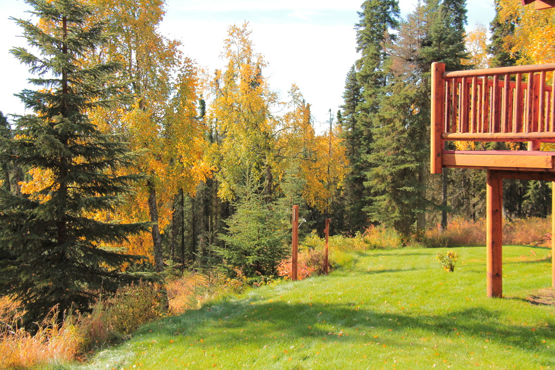 Rear balcony of main lodge and Alaska forest setting.